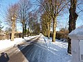 Pollarded avenue of trees, snow and long shadows - geograph.org.uk - 1651017.jpg