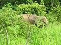 Polonnaruwa, Sri Lanka - panoramio (43).jpg