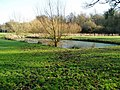 Pond in Boies Meadow - geograph.org.uk - 1165098.jpg