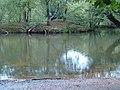 Pond rain - geograph.org.uk - 2477543.jpg