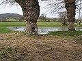 Pond with pollarded oaks - geograph.org.uk - 708094.jpg