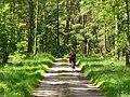 Potsdamer Heide - Rad- und Waldweg (Cycle- and Woodland Path) - geo.hlipp.de - 37847.jpg