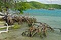 Prickly Pear Island Mangroves - panoramio.jpg