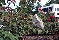 Prickly pear garden (5537253490).jpg