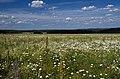 Prigorodnyy r-n, Sverdlovskaya oblast', Russia - panoramio (68).jpg