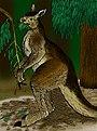 Procoptodon goliah.jpg