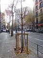 Protector de árbol.jpg