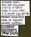 Pseudomyrmex oculatus casent0005875 label 1.jpg