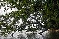 Pulau Ubin - panoramio (2).jpg