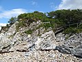 Quartzite outcrop - geograph.org.uk - 901061.jpg
