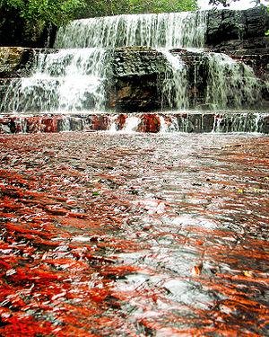 Canaima National Park - Jasper´s Creek (Canaima National Park)