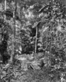 Queensland State Archives 224 Bush land between Eumundi and Noosa Heads c 1931.png