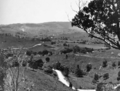 Queensland State Archives 270 Pinbarren Noosa Shire looking from Mr C F Ferriss Glenydale Farm c 1931.png