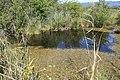 Réserve naturelle Marais Lavours Aignoz Ceyzérieu 69.jpg