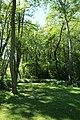 Réserve naturelle régionale des étangs de Bonnelles le 26 mai 2017 - 06.jpg