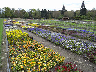 Award of Garden Merit - Trials field at the Royal Horticultural Society Garden in Wisley, showing some of the hundreds of varieties assessed for the Award of Garden Merit