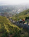 Radebeul, the stairs to the Spitzhaus.jpg