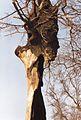 Rapocin (2.3.1993) in Poland (5).jpg