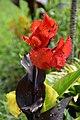 Red (44364337040).jpg