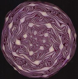 Red Cabbage cross section showing spirals