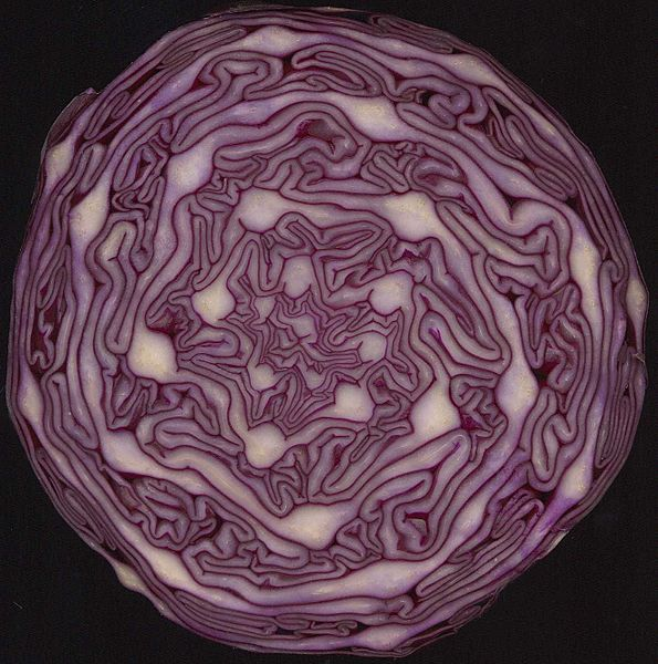 File:Red Cabbage cross section showing spirals.jpg