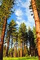 Red Cedar - panoramio.jpg
