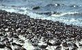 Reed's Beach, NJ. Credit- USFWS (5269752766).jpg