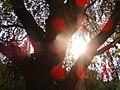 Regents Park (11951039).jpg