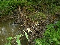 Rezerwat Bobry w Uhercach 02.jpg