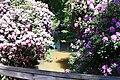 Rhododendronpark Bremen 20090513 037.JPG