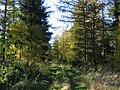 Ride, Humbie Wood. - geograph.org.uk - 73520.jpg