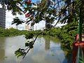 Rio Capibaribe na Jaqueira 04.jpg