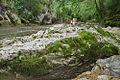 River Mali Rzav and Visocka Banja Spa in Serbia - 4283.NEF 07.jpg