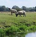 River Nene at Stibbington - August 2013 - panoramio.jpg