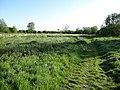 Riverside Meadows, Shepreth - geograph.org.uk - 1309911.jpg