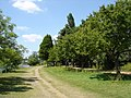 Riverside path near Hampton Court - geograph.org.uk - 1331521.jpg