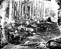 Road building crew with horse-drawn equipment near Montesano, Washington, ca 1907 (INDOCC 413).jpg