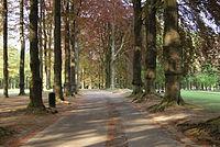 Road in Parc d'Osseghem2.jpg