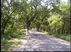 The road to Mohanpur, going towards Begusarai (south of Mohanpur) from Manjhaul (north of Mohanpur)