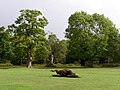 Rolling pony at Denny Wood campsite, New Forest - geograph.org.uk - 251589.jpg