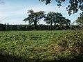 Rough grassland, near Great Melton - geograph.org.uk - 77361.jpg