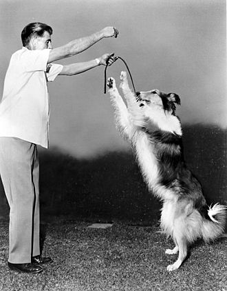 Dog training - Rudd Weatherwax trains Lassie.