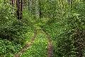 Ryazansky District, Ryazan Oblast, Russia - panoramio (49).jpg