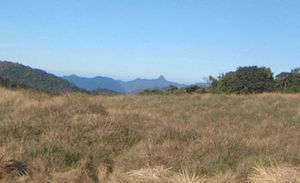 Horton Plains National Park - Adam's Peak seen across the grasslands of the park