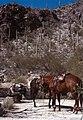Saguaro National Park-04-Parkaufsicht-1980-gje.jpg