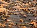 Sahara 2.jpg