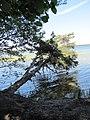 Salako sen., Lithuania - panoramio (72).jpg