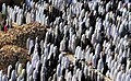 Salat Eid al-Adha 1434 AH, Torbat-e Jam - 16 October 2013 01.jpg
