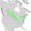 Salix petiolaris range map 1.png