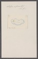 Salpa informis - - Print - Iconographia Zoologica - Special Collections University of Amsterdam - UBAINV0274 092 08 0042.tif